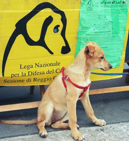 Lega Nazionale del Cane