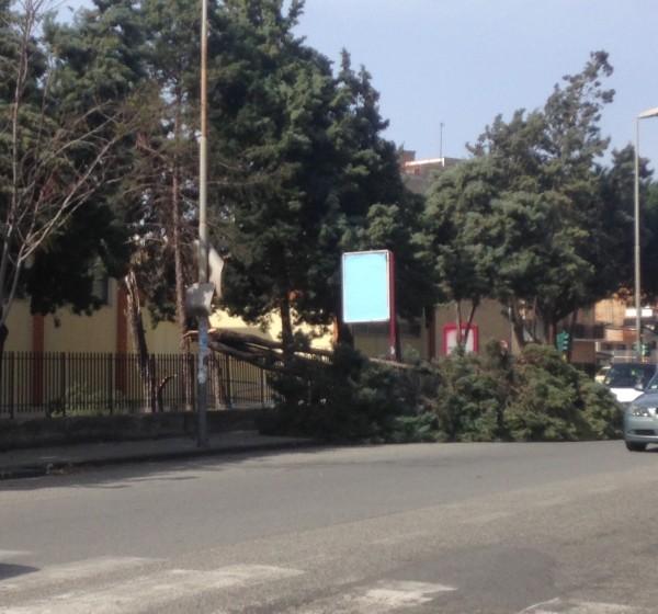 albero spezzato dal vento sul Viale Europa a Reggio Calabria