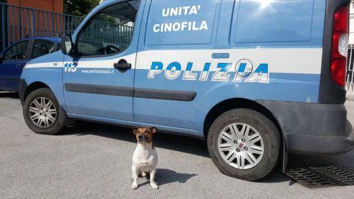 Polizia - Unità cinofila
