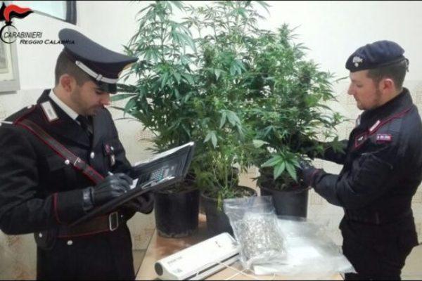 Bovalino (RC), 1 arresto e 3 persone denunciate per produzione, traffico e detenzione illeciti di stupefacenti